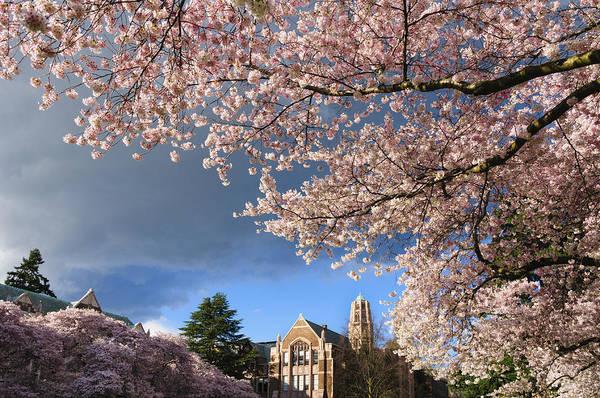 University Of Washington Wall Art - Photograph - Cherry Blossoms At University Of Washington by Greg Vaughn