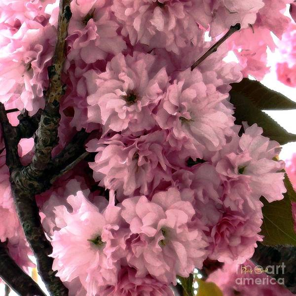 Digital Art - Cherry Blossoms by Dale   Ford