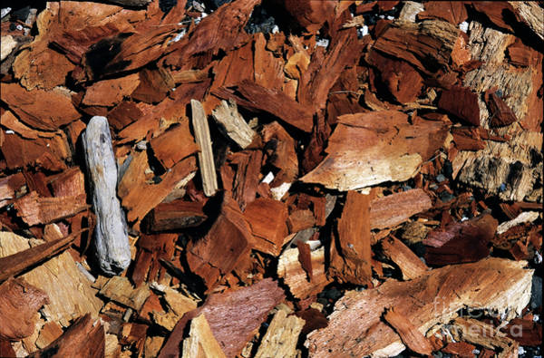 Wall Art - Photograph - Chips Of Wood by Sami Sarkis