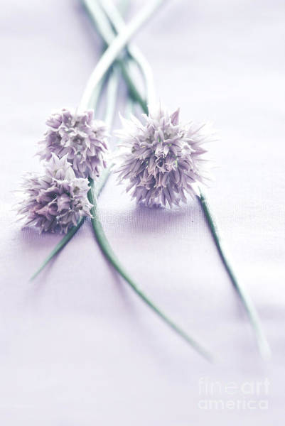 Chive Photograph - Chives by HD Connelly