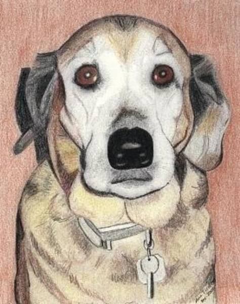 Mutt Drawing - Chloe by Ana Tirolese