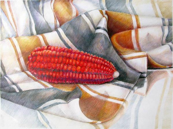 Indian Corn Drawing - Choclo Solitario by Sonia Tudela
