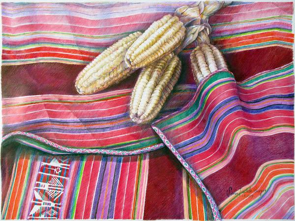 Indian Corn Drawing - Choclos Entre Aguayos by Sonia Tudela