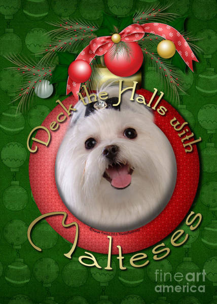 Deck Digital Art - Christmas - Deck The Halls With Malteses by Renae Crevalle