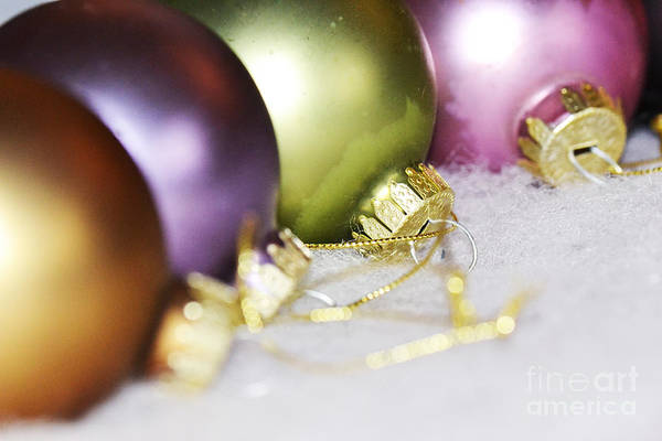 Photograph - Christmas Colours by Traci Cottingham
