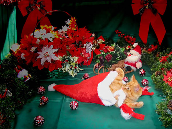 Photograph - Christmas Kittens - Kitty Cat Chewing On Santa's Hat - Red Xmas Bows And Poinsettia Flower Basket by Chantal PhotoPix