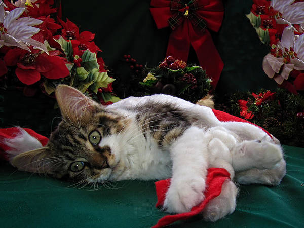 Photograph - Christmas Scene W Kitten - Sleepy Kitty Cat W Paws Stretched Out Waiting For Santa Claus On Xmas Eve by Chantal PhotoPix