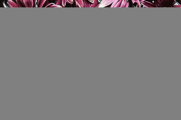 Wall Art - Photograph - Chrysanthemum 2 by Skip Nall