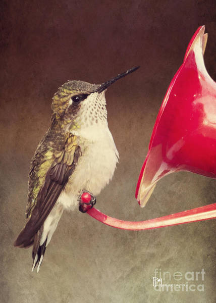 Photograph - Chubby Hummer by Pam  Holdsworth