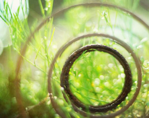 Photograph - Circle Of Life by Rebecca Sherman