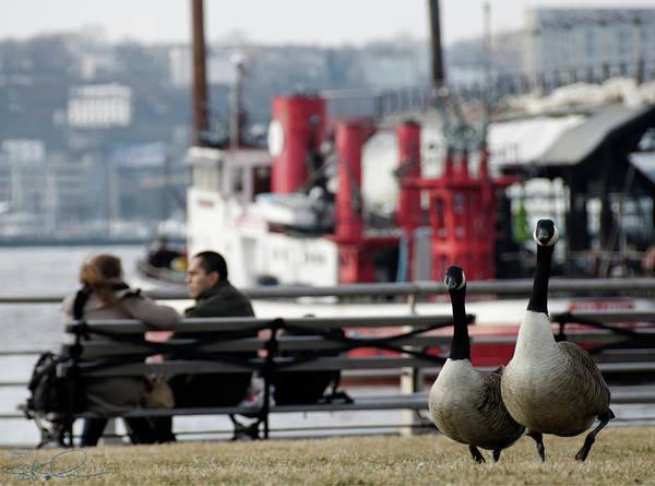 Photograph - City Geese by S Paul Sahm
