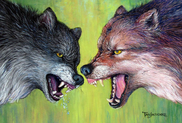 Alpha Wolf Wall Art - Painting - Clash Of The Alphas by Tanja Ware