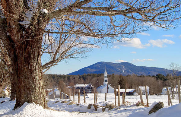 Photograph - Classis Tamworth Trees Winter by Larry Landolfi