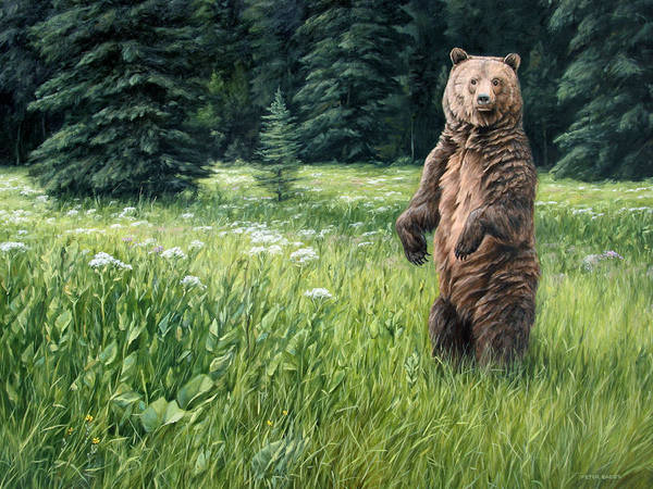 Painting - Close Encounter by Peter Eades