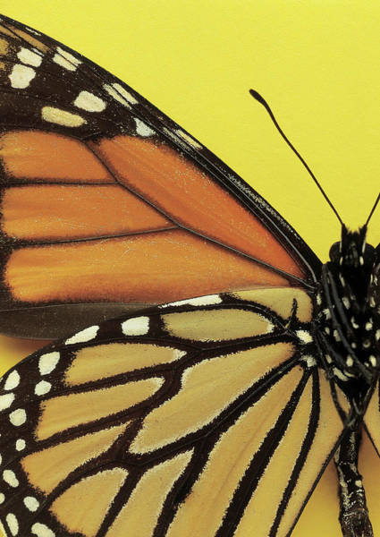 Photograph - Close-up Of The Wings Of A Butterfly by Stockbyte