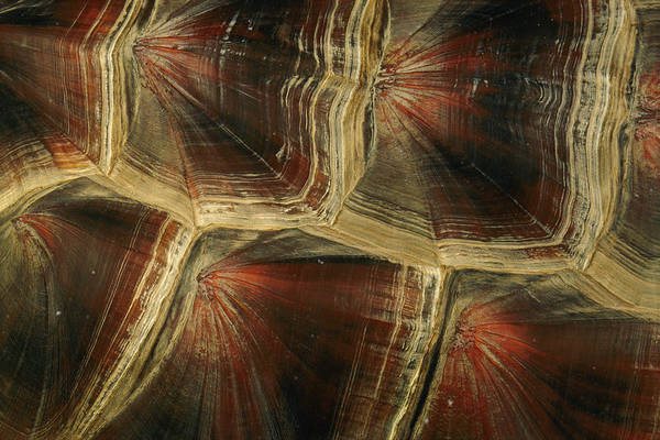 Snapping Wall Art - Photograph - Close View Of Snapping Turtle Shell by Darlyne A. Murawski