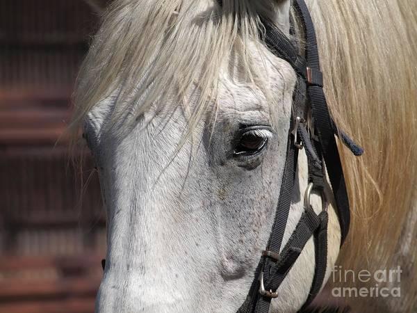 Wall Art - Photograph - Closeup Portrait Of A Horse by Yali Shi