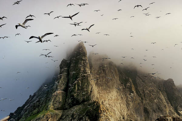 The Rookery Wall Art - Photograph - Cloud Covers A Sea Bird Rookery High by Jim Richardson
