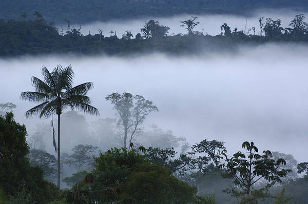 Photograph - Cloud Forest Vegetation In Mist by Pete Oxford