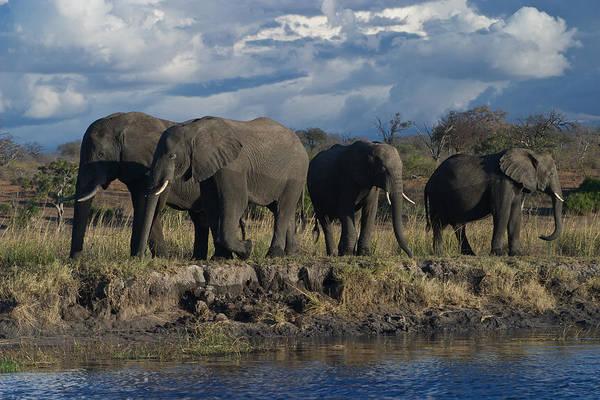 Clouds And Elephants Art Print