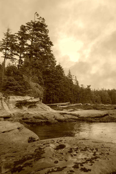 Photograph - Cloudy Daydreams On Botanical Beach - Sepia by Marilyn Wilson