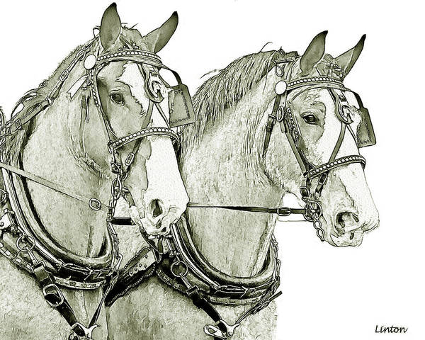 Digital Art - Clydesdale Pair by Larry Linton