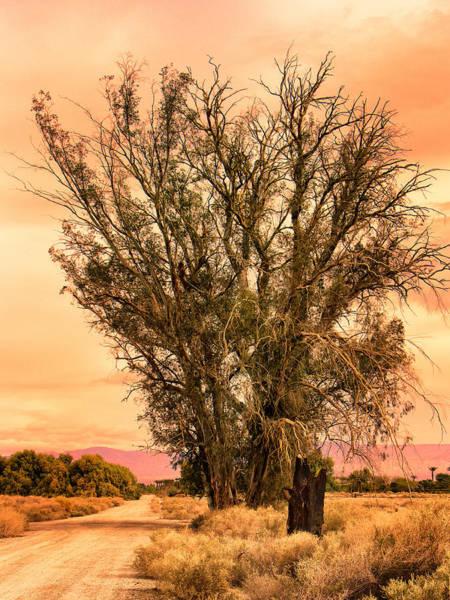 Rancho Mirage Photograph - Coachella Valley Morning by Dominic Piperata