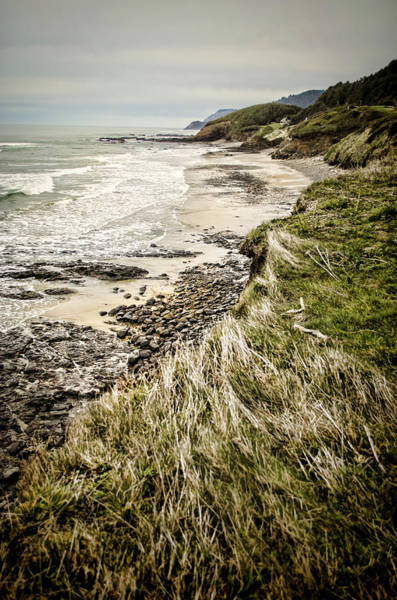 Photograph - Coastal Grass by Heather Applegate