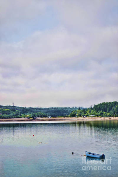 Photograph - Coastal Life by Traci Cottingham