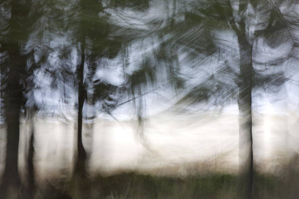 Impressionist Photograph - Coastal Pines by Carol Leigh
