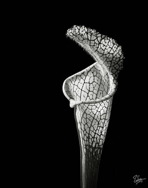 Wall Art - Photograph - Cobra Lily In Black And White by Endre Balogh