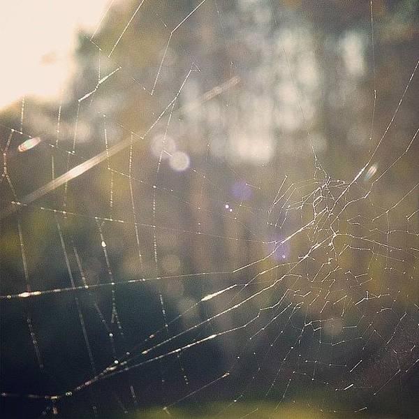 Grace Wall Art - Photograph - #cobweb #web #spider #macro #closeup by Grace Shine