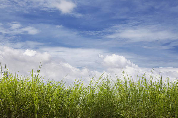 Wall Art - Photograph - Grass And Sky With Clouds by Skip Nall