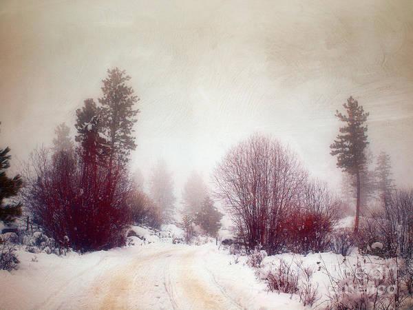 Photograph - Cold Road by Tara Turner