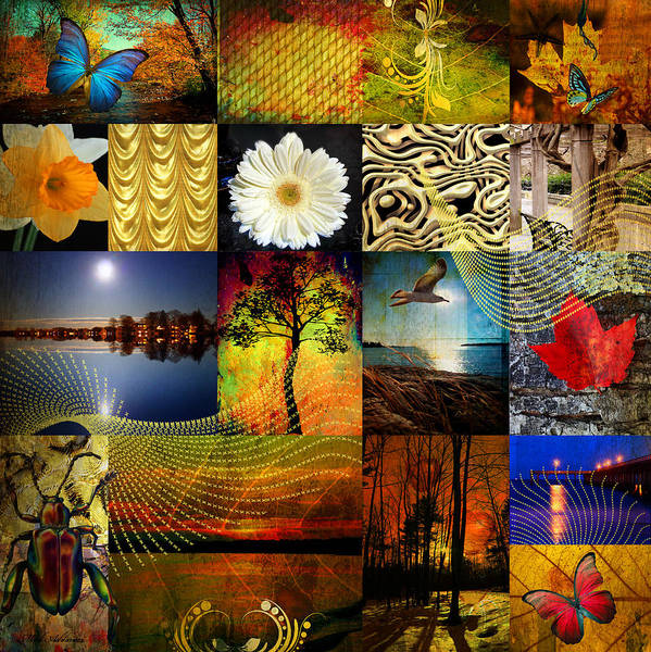 Passion Flower Photograph - Collage Of Colors by Mark Ashkenazi
