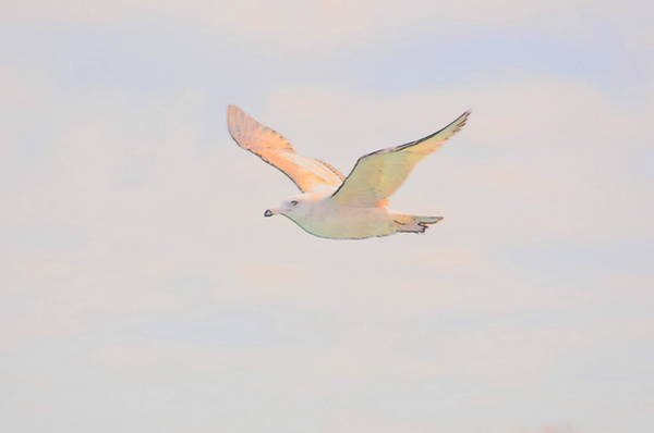 Photograph - Color Creative Seagull by Randy J Heath