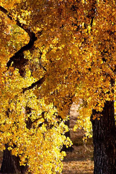 Photograph - Colorado Gold by Colleen Coccia
