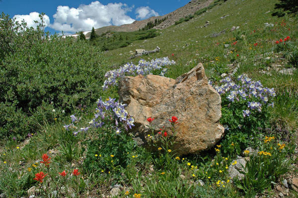 Photograph - Colorado Mountain Wildflowers by Lynn Bauer