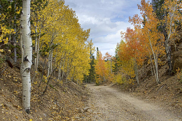 Photograph - Colorado Rocky Mountain Colorful Autumn Back Road by James BO Insogna