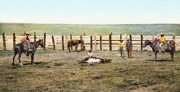 Photograph - Colorado: Roping A Steer by Granger