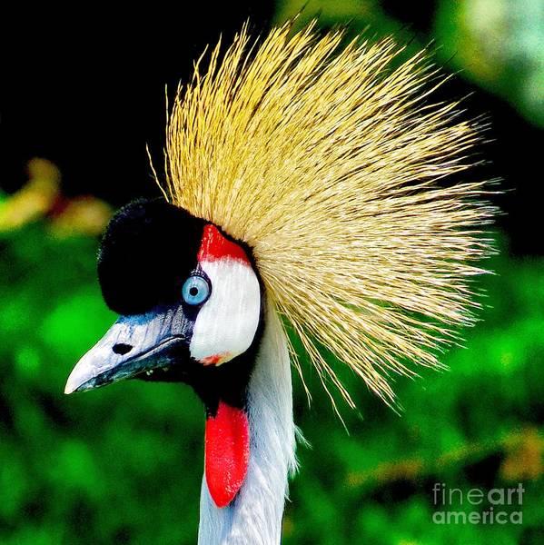 Photograph - Colorful Bird by Nick Zelinsky