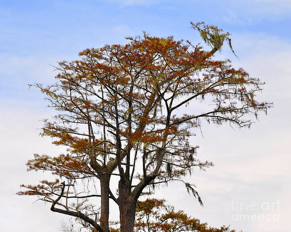 Wall Art - Photograph - Colorful Cypress by Al Powell Photography USA