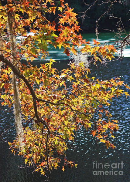 Photograph - Colorful Fall Leaves Over Blue Water by Carol Groenen
