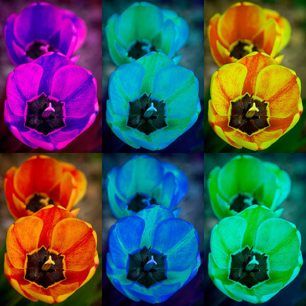 Photograph - Colorful Tulip Collage by James BO Insogna