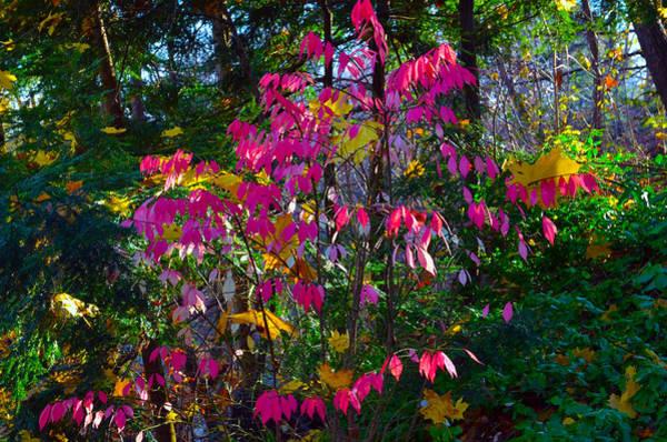 Photograph - Colors by Dragan Kudjerski