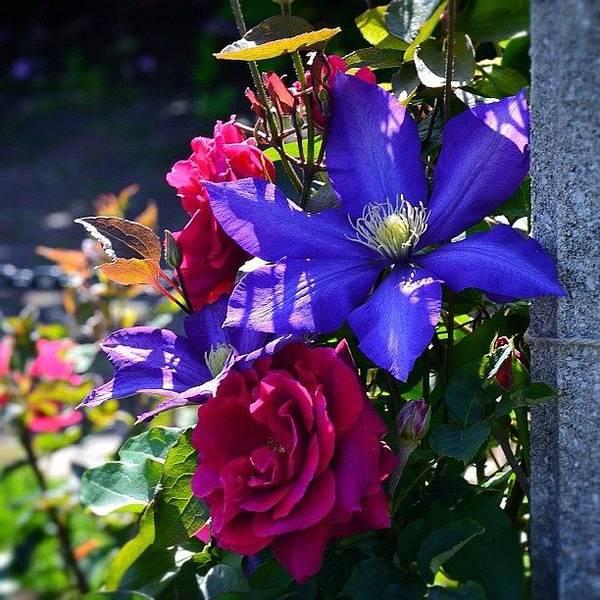 Roses Wall Art - Photograph - Colors by Natasha Marco