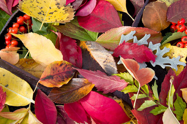 Photograph - Colors Of Autumn by Shane Bechler