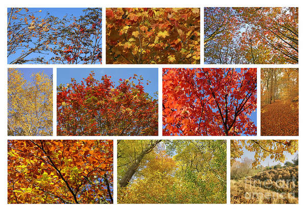 Photograph - Colours Of Autumn by David Birchall