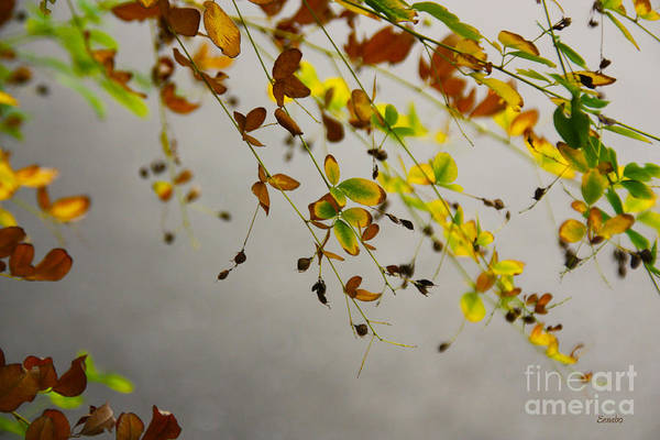 Photograph - Colours Of Autumn by Eena Bo