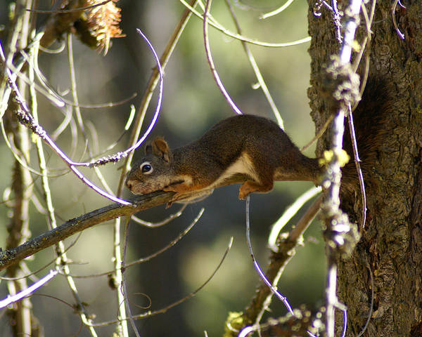 Photograph - Comfy In A Tree by Ben Upham III